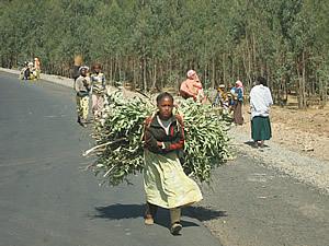 薪を背負って郊外から市内に行商に赴く少女